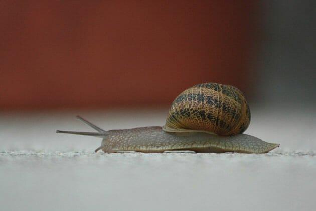 Very-Slow